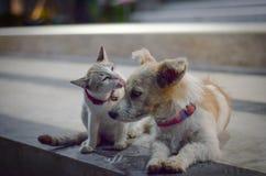 Katt- och hundfamilj Royaltyfri Fotografi