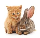 Katt och kanin Fotografering för Bildbyråer