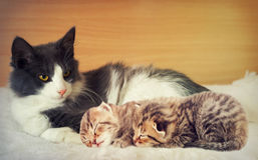 Katt och kattungar Arkivbild