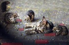 Katt och kattungar Arkivfoton