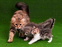 Katt och kattunge Royaltyfri Fotografi