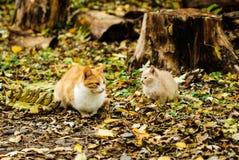 Katt och kattunge i skogen Royaltyfri Foto