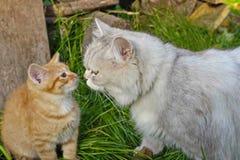 Katt och kattunge på gräset Arkivbilder
