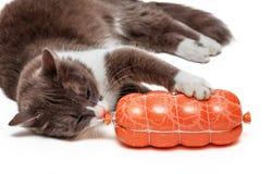 Katt och korv Arkivbild