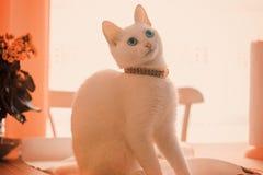 Katt och lek arkivbilder