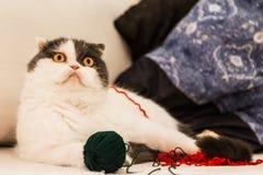 Katt och lekar Royaltyfri Bild