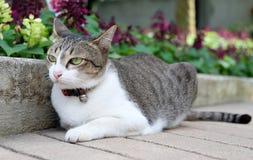 Katt och lilablomma Fotografering för Bildbyråer