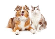 Katt och lycklig hund tillsammans Royaltyfria Bilder