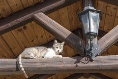 Katt och lykta Arkivbilder