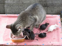 Katt och möss Arkivfoto