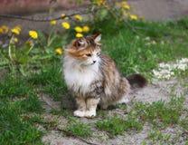 Katt och maskrosor Arkivbilder