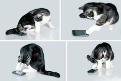 Katt och mobil Royaltyfri Foto