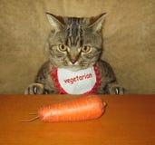 Katt och morot royaltyfria foton
