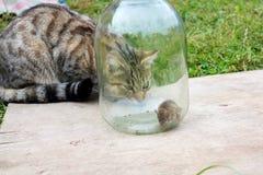 Katt och mus Arkivbild