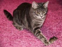 Katt och mus Arkivbilder