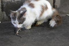 Katt och mus Royaltyfria Bilder