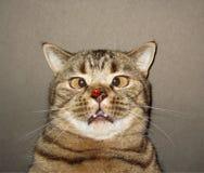 Katt och nyckelpiga royaltyfri bild