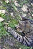 Katt och padda Arkivbild