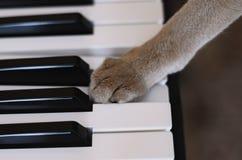 Katt och piano Royaltyfria Bilder