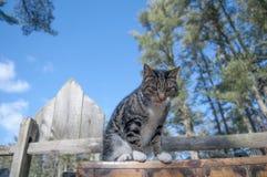 Katt och staket royaltyfri foto