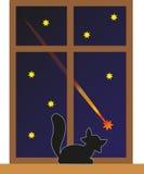 Katt och stjärna Arkivfoto