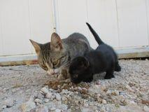 Katt och svartkattunge Arkivbilder