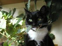 Katt och trädet Arkivbilder