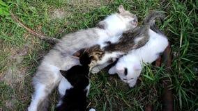 Katt och tre kattungar lager videofilmer