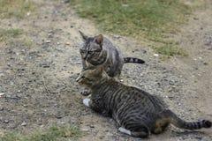 Katt och vänner Royaltyfria Foton
