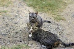 Katt och vänner Royaltyfri Foto