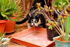 Katt och växter arkivfoton