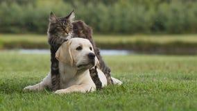 Katt och valp Arkivbild
