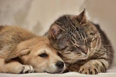 Katt och valp Arkivfoto