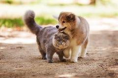 Katt och valp Fotografering för Bildbyråer