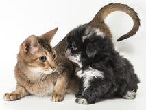 Katt och valpen arkivfoto