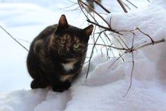 Katt oj snön Arkivbilder
