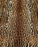 Katt- pälsbakgrund Arkivfoton