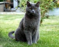 Katt på ängen Royaltyfri Foto