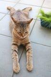 Katt på balkong Arkivbild