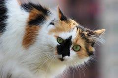 Katt på balkongen Royaltyfri Fotografi