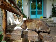 Katt på banchen royaltyfria bilder