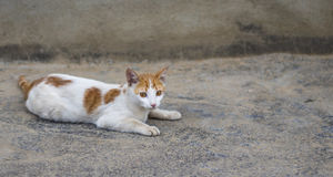 Katt på betong Royaltyfria Bilder