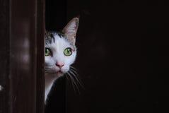Katt på dörren royaltyfri fotografi