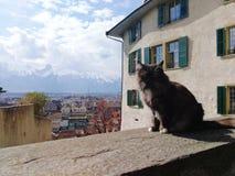 Katt på den Thun slotten, Schloss Thun, Schweiz fotografering för bildbyråer