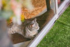 Katt på det klara glass fönstret Fotografering för Bildbyråer