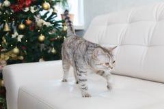 Katt på det vita soffa- och julträdet Arkivfoto