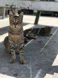 Katt på djup av fältet Fotografering för Bildbyråer