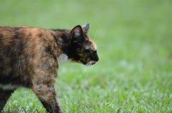 Katt på en beskickning Arkivfoto