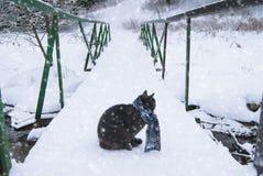 Katt på en bro Arkivfoton