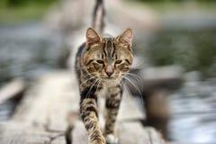 Katt på en brygga på sjön Royaltyfria Foton